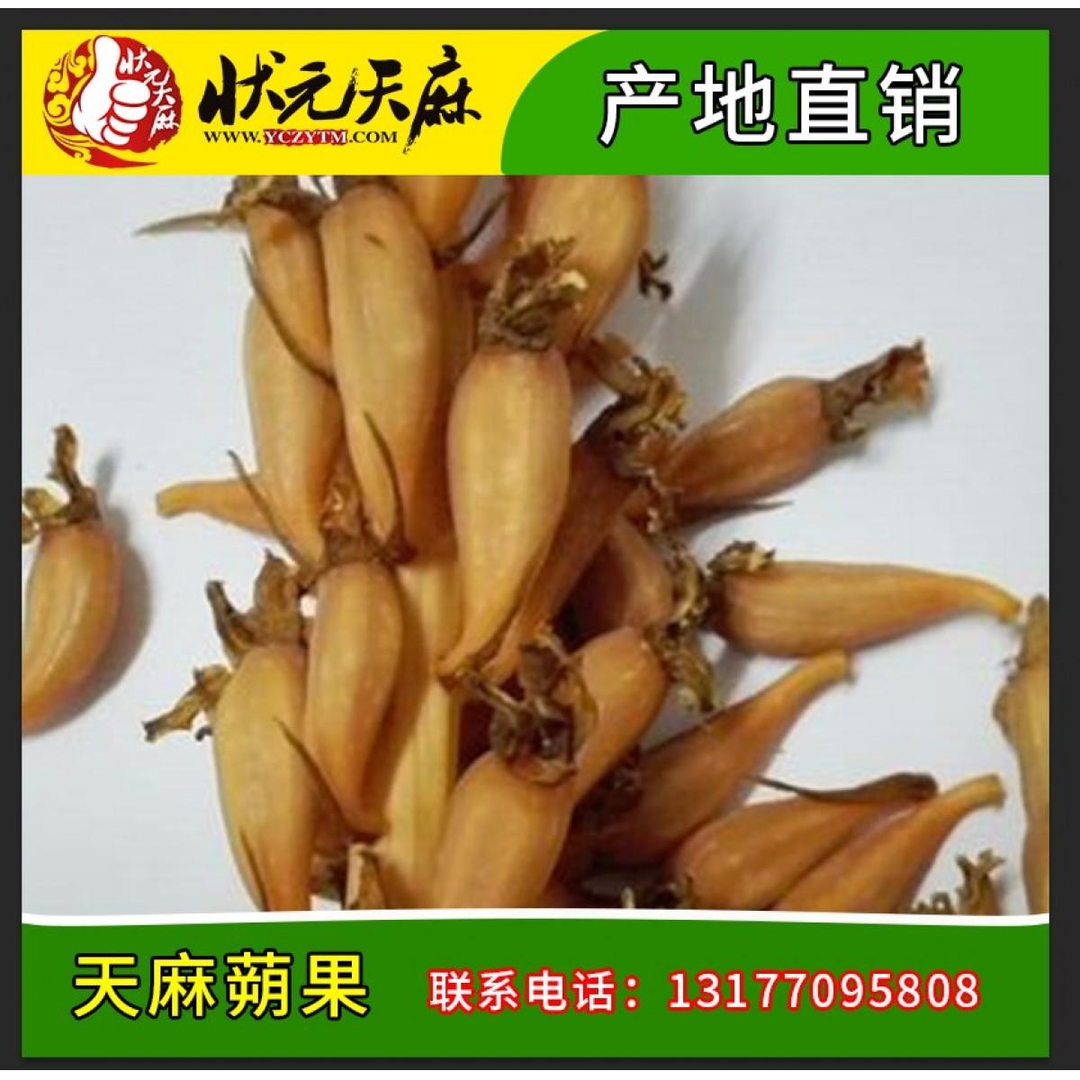 【状元天麻】新鲜天麻蒴果 乌红天麻蒴果 宜昌天麻种子