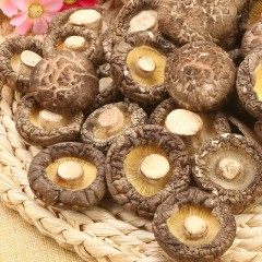 大山合香菇 一级庆元香菇干货农家土特产蘑菇食用菌肉厚冬菇 包邮