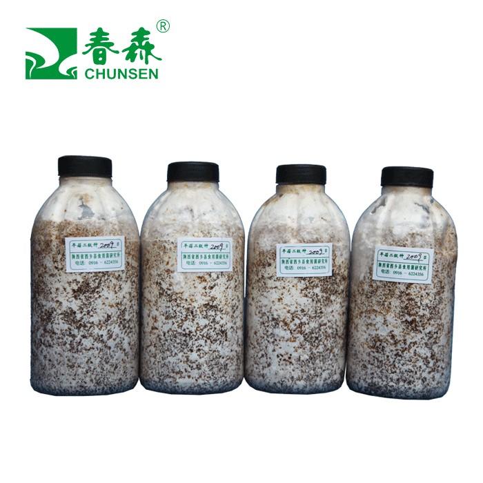 春森牌平菇2009母种、原种、栽培种