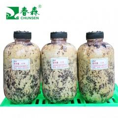 春森牌天麻蜜环菌A25号母种、原种、栽培种
