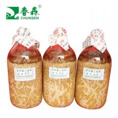 春森天麻蜜环菌A9母种、原种、栽培种