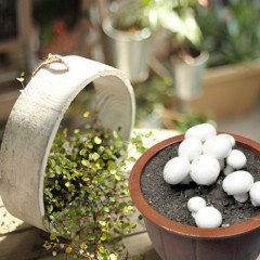 华裕新美DIY蘑菇桶