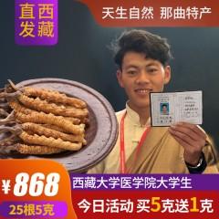 西藏那曲冬虫夏草正品新鲜野生胶囊礼盒装玉树断草25根5克包邮